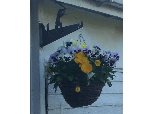 180515 Hanging Baskets 2